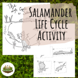 Salamander Life Cycle Activity Booklet