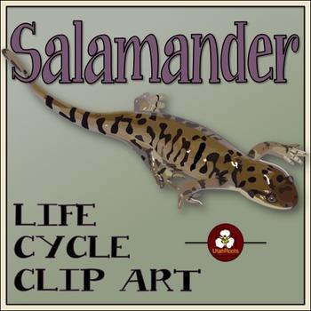 Salamander Life Cycle Clip Art