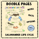 Salamander Life Cycle Doodle Pages
