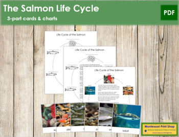 Salmon Fish Life Cycle Nomenclature Cards and Charts