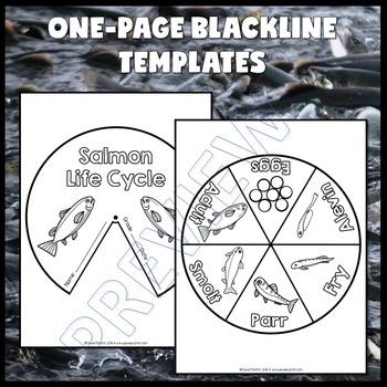 Animal Life Cycle Activities (Salmon Life Cycle Craft)