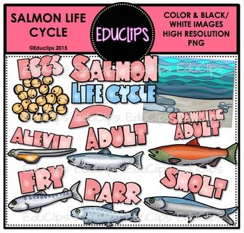 Salmon Life Cycle Clip Art Bundle {Educlips Clipart}