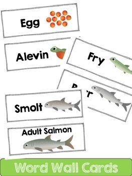 Salmon Life Cycle: Mini Unit
