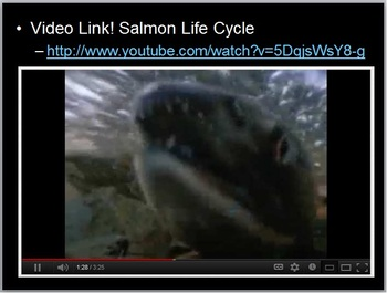Salmon Lesson