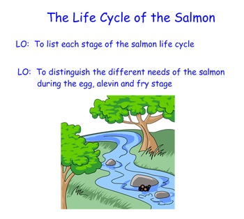 Salmonids in the Classroom: Life Cycle