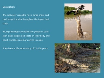 Salt Water Crocodile - Power Point - Facts Pictures Information