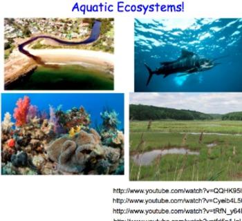 Saltwater, Freshwater & Estuary Biomes - Lesson Presentation, Videos