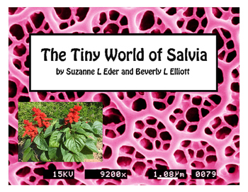 Salvia Flowers, leaves, petals, and Pollen with SEM Images