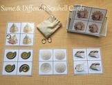 Same & Different Seashell Cards (Montessori)