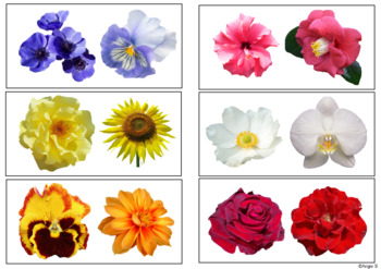 Same or Different- Flowers