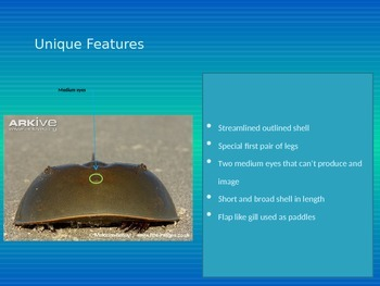 Sample Animal Research, Horseshoe Crab