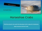 Sample Animal Research, Horseshoe Crab