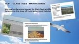 Marine Sandy Beaches - Ocean Unit 11 Bundled