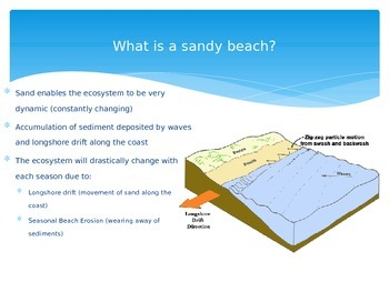 Sandy Intertidal Zones