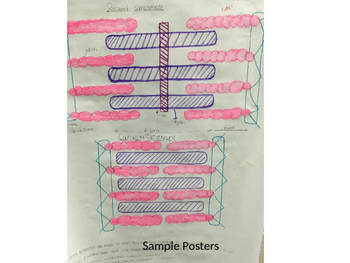Sarcomere Diagram Poster Project
