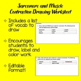 Sarcomere and Muscle Contraction Drawing Worksheet