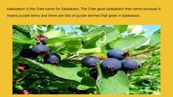 Saskatoon Landscape