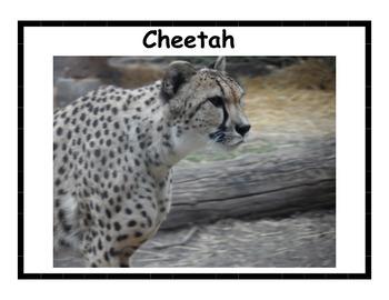 Savanna Animal Posters