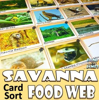 Food Chain and Food Web: Savanna Card Sort