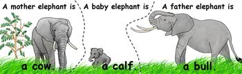 Savanna Safari Animal Families Matching Puzzles (INCLUDED in MiniMuseum)
