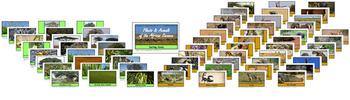 Savanna Safari Sorting Mats and Cards