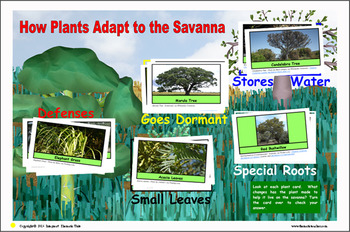 Savanna Safari Sorting Mats and Cards (INCLUDED in MiniMuseum)