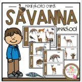 Savanna Set Real Photos Cards