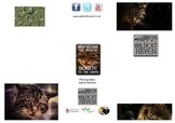 Save the Scottish Wildcat Leaflet For Use With Guided Reading Research Pack