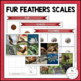 Scales, Fur & Feathers | Nature Curriculum in Cards | Montessori