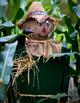 Scarecrow Reading Passages