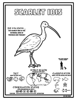 Scarlet Ibis -- 10 Resources -- Coloring Pages, Reading & Activities