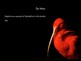 Scarlet Ibis -Symbolsim