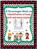 Body Parts and Sense Organs Scavenger Hunt