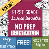 Doodle Notes - FREEBIE! NO-PREP First Grade Science Doodles Printables