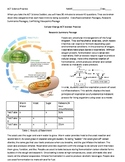 Science ACT Practice on Cellular Respiration and Fermentation