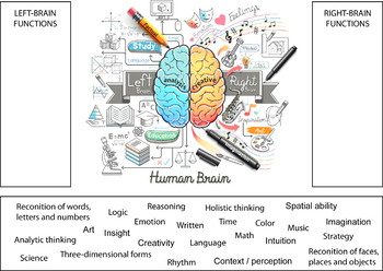 Science Activity - Right and Left Brain