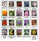 Science Adventure: Flowers Board Game