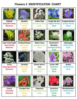 Science Adventure: Flowers Easy Vol #2
