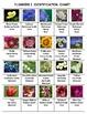 Science Adventure: Flowers Volume 3