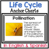 Science Anchor Chart Posters in English & Spanish: Life Cycles