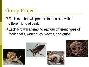 Science Animal Adaptations to Survive Gr 5 - Investigation Lab Hands-On Activity