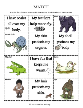 science animal body coverings by mrs motley solteacher tpt. Black Bedroom Furniture Sets. Home Design Ideas