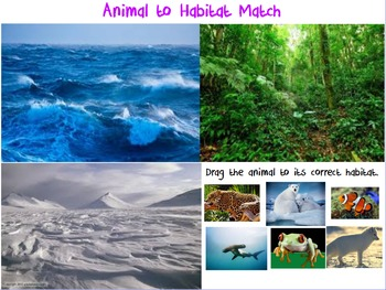 Science: Animal Habitats