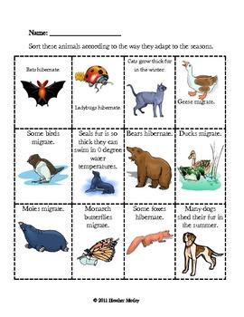 Science: Animals Adapt to the Seasons