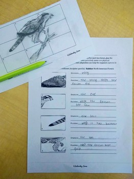 Science + Art Activity: Structure and Function {Forest Animal Adaptations}