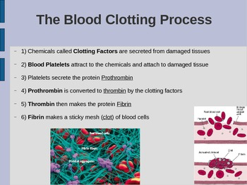(FREE) Blood Power Point: Red & White Cells, Platelets, Clots, & Hemophillia