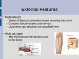 Bones PowerPoint: (Anatomy Unit: Skeletal System PowerPoint)