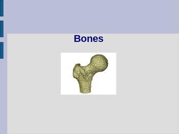 Bones PowerPoint: (Anatomy Unit: Skeletal System PowerPoint)