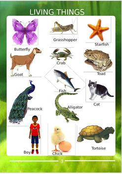 Science Book for Preschoolers