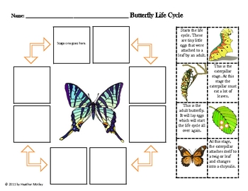 science butterfly life cycle by mrs motley solteacher tpt. Black Bedroom Furniture Sets. Home Design Ideas